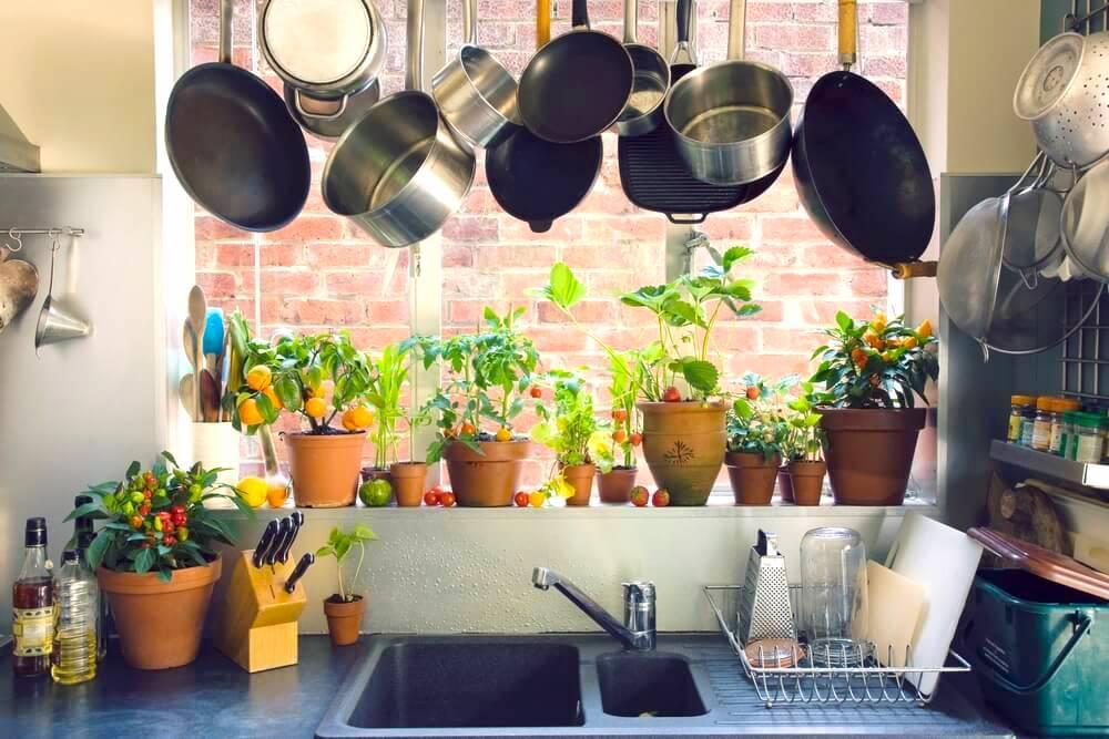 Potted plants on kitchen window sill